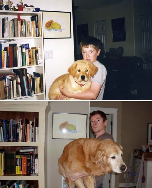 animals-before-after-then-now-31_resultat