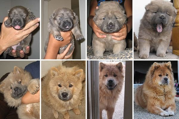 animals-before-after-then-now-43_resultat