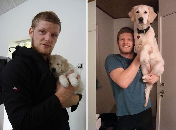 animals-before-after-then-now-45_resultat