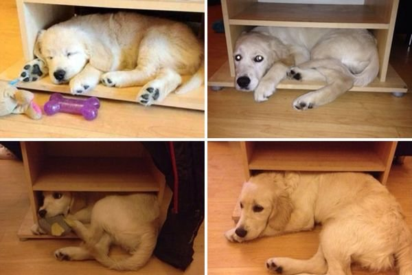 animals-before-after-then-now-46_resultat