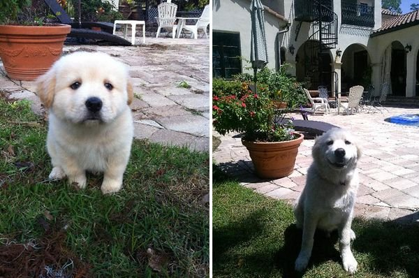 animals-before-after-then-now-48_resultat