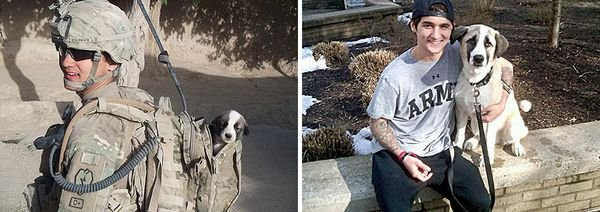 animals-before-after-then-now-49_resultat