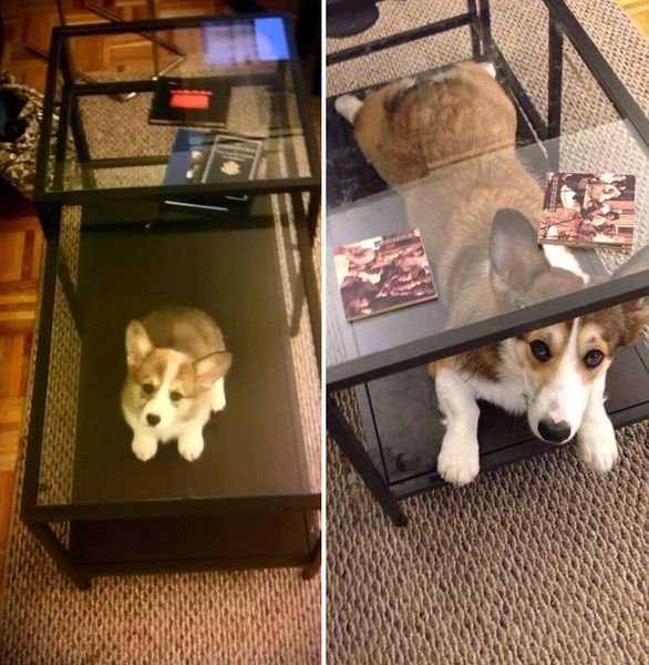 animals-before-after-then-now-50_resultat