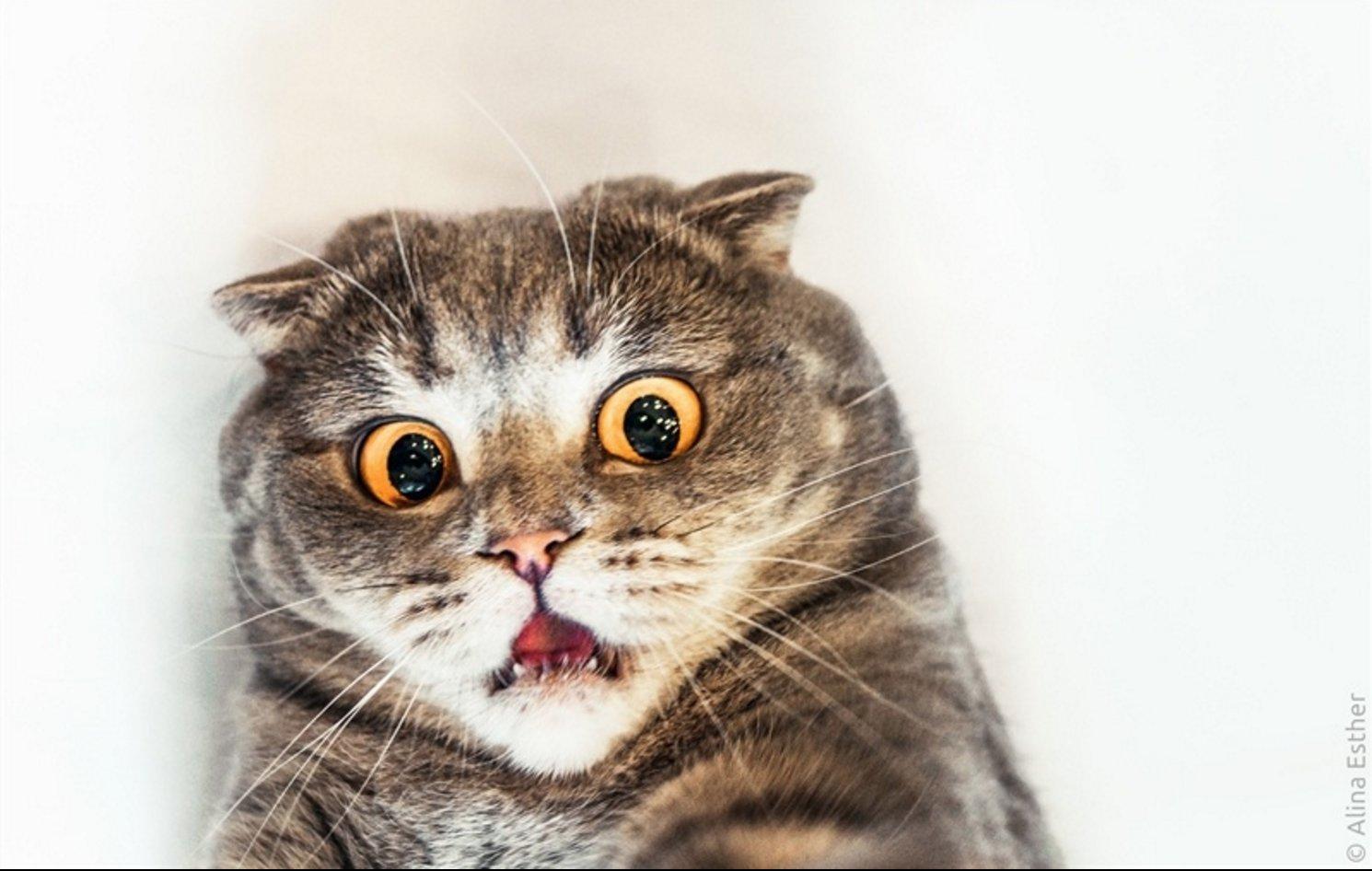 bouuuuh.png?resize=1200,630 - 20 des chats pas photogéniques du TOUT