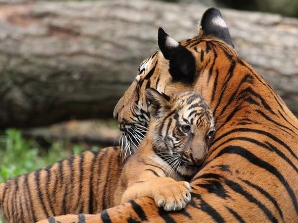 calin_animal_10