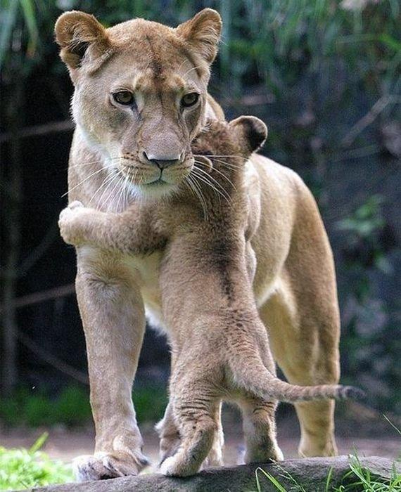 calin_animal_12