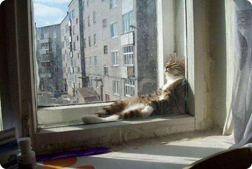 chat relax 001.jpg?resize=1200,630 - 30 des chats à la cool qui se relaxent dans des positions étranges