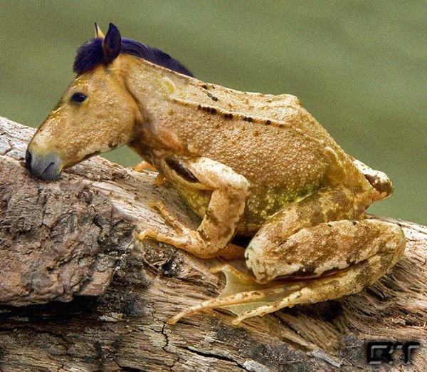 cheval grenouille_resultat