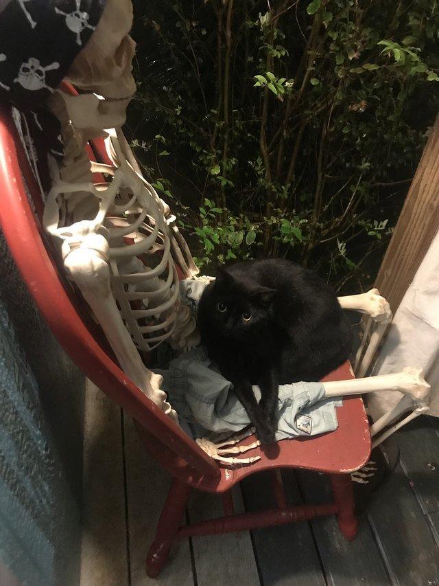 Cat sitting on skeleton
