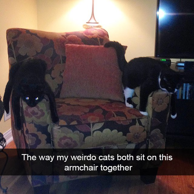 Two cats laying on chair