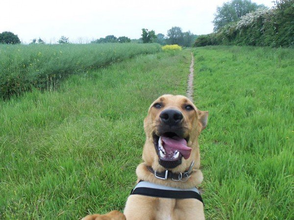 dog-selfie1 (1)
