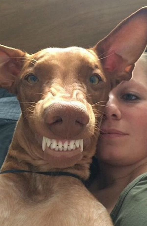 dog-selfie12 (1)