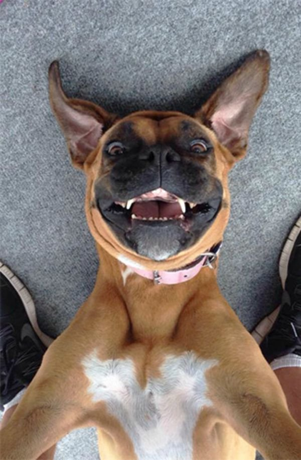 dog-selfie17 (1)