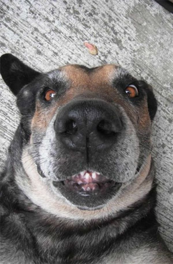 dog-selfie4 (1)