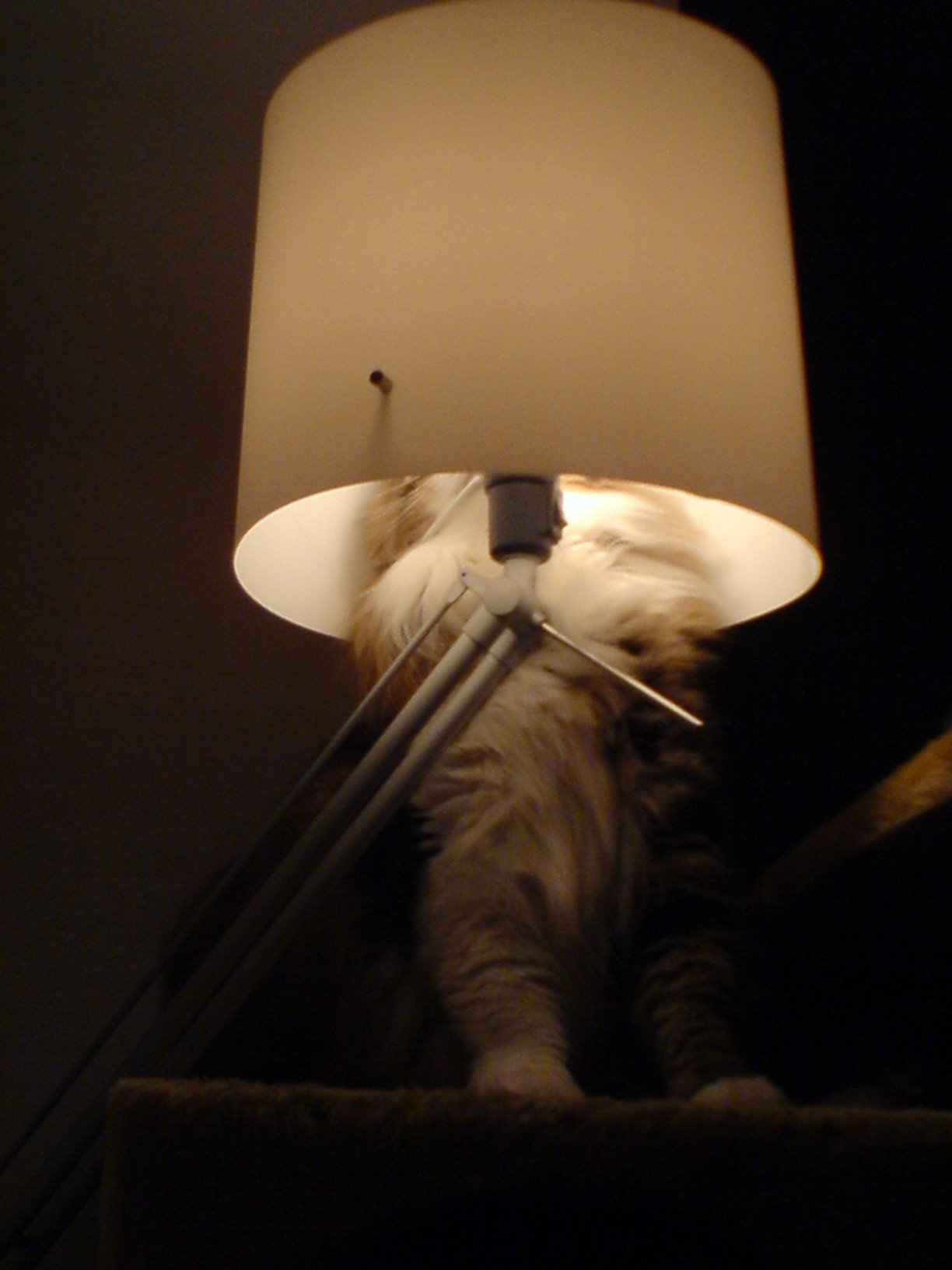 huf-chat-lampe