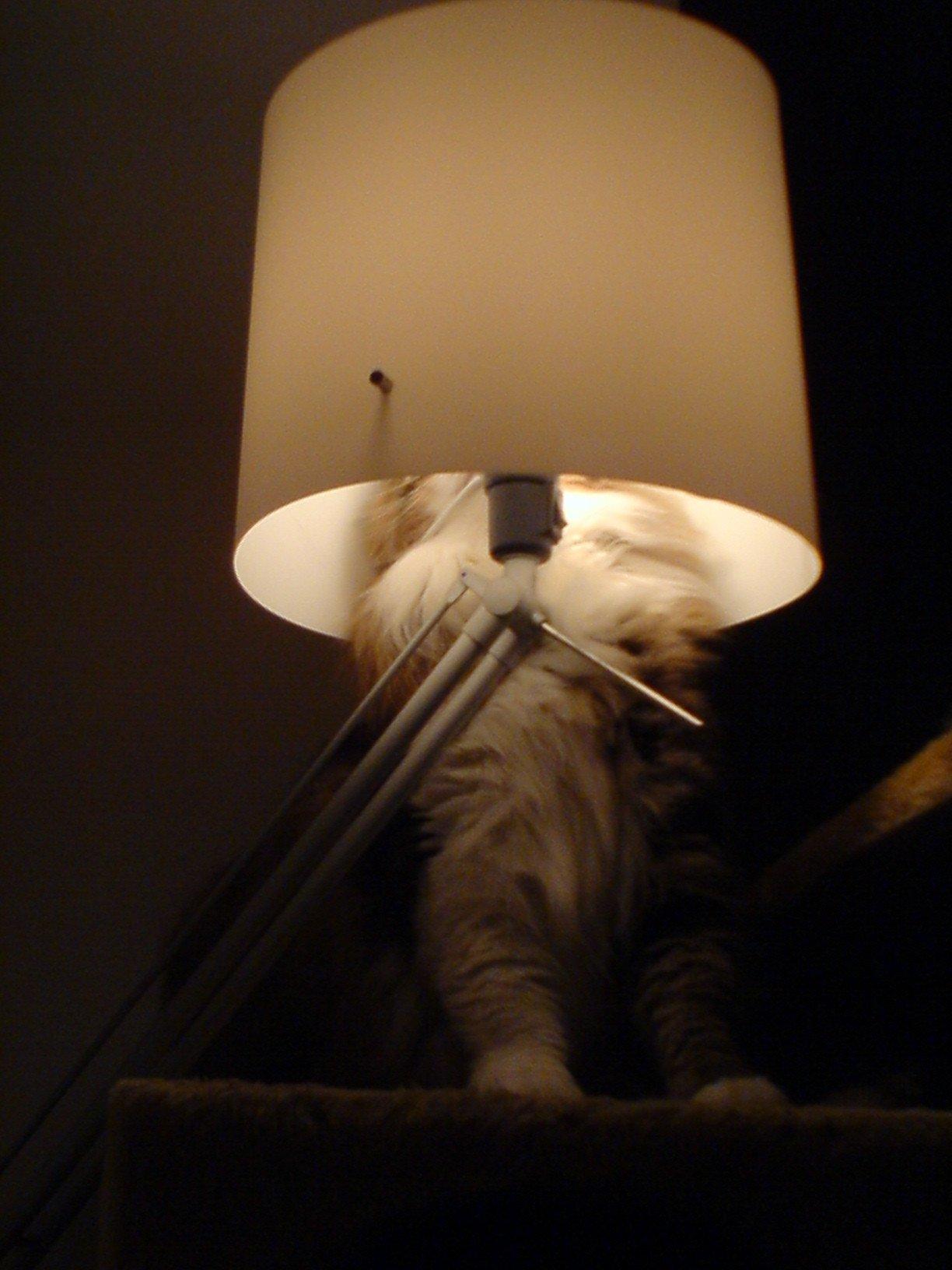 huf-chat-lampe
