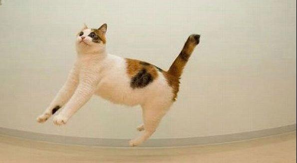 invisible skate e1543077067622.jpg?resize=1200,630 - 39 des chats invisibles, le grand n'importe quoi