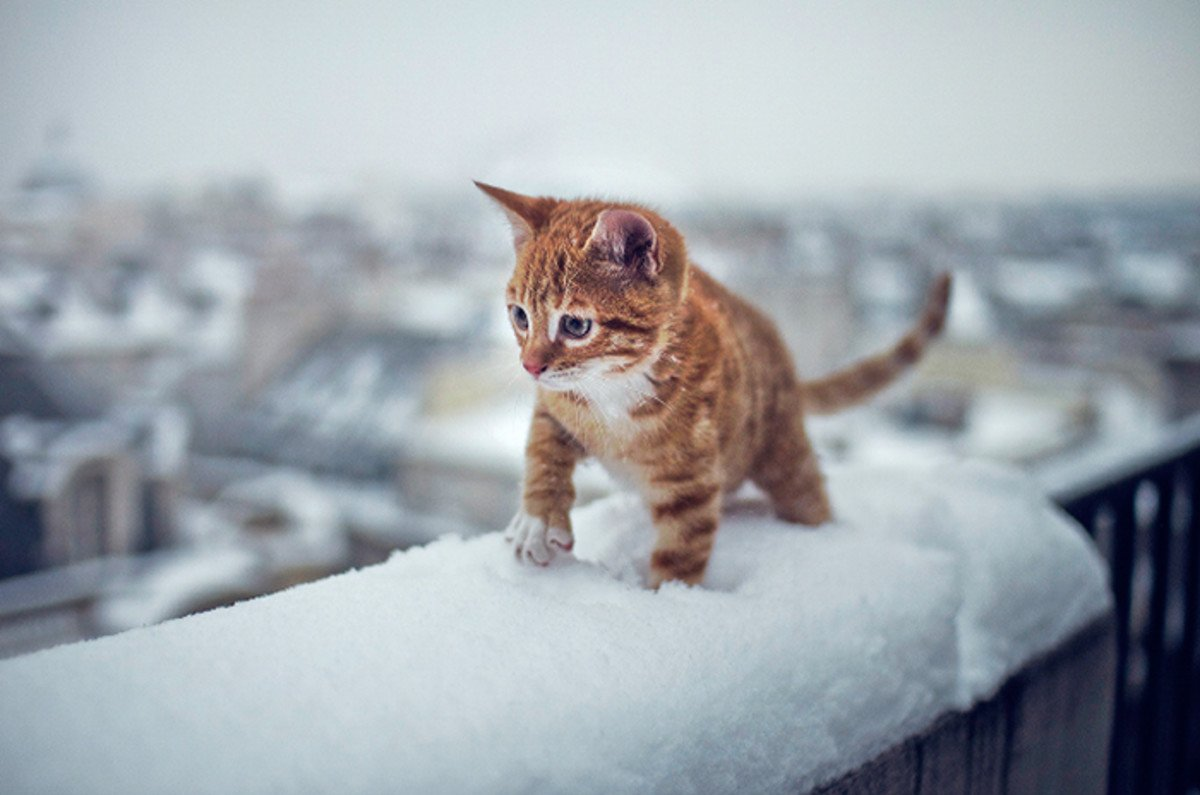 kitty-lost-in-snow