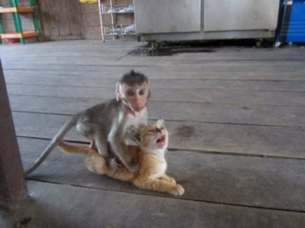 singe chaton