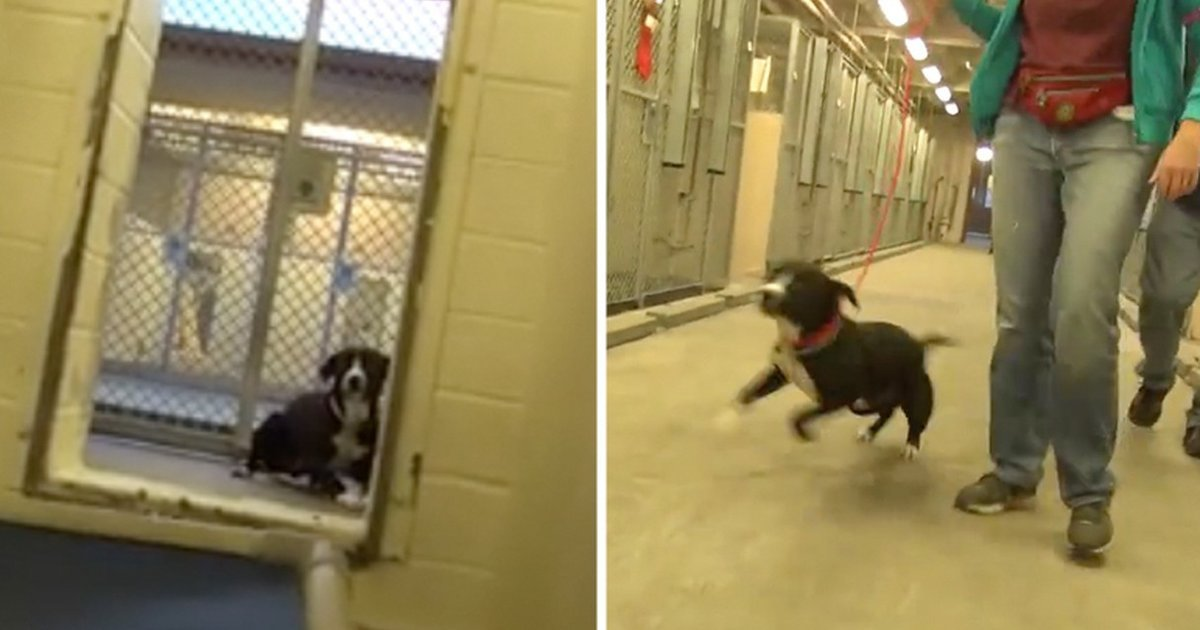 a 8.jpg?resize=412,232 - Heartwarming Moment Shelter Dog Realizes He Is Getting Adopted