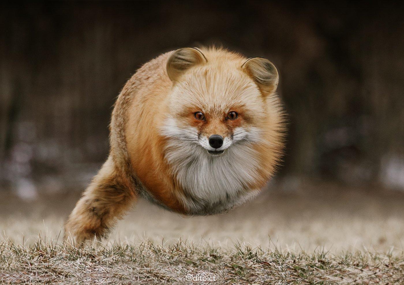 aditya aryanto aniball animaux boule 2.jpg?resize=1200,630 - [Photos] Il transforme des animaux en véritable ballons!