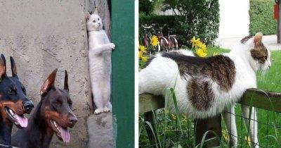 admin ajax 1.jpg?resize=412,275 - 猫は不思議な生き物だと証明できる31枚の画像コレクション!