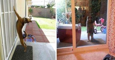 admin ajax 4.jpg?resize=1200,630 - 【おうちに入りたいです!】どうしても家の中に入りたい動物の爆笑画像25枚まとめ