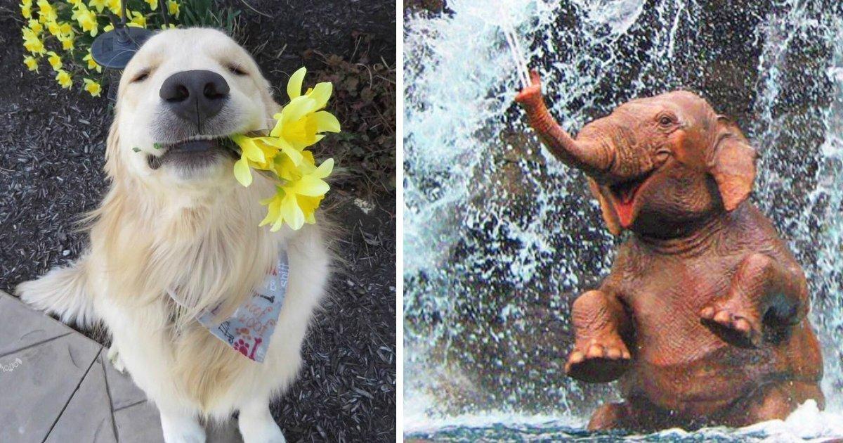 animal difficult day.jpg?resize=412,232 - 21 photos qui vont vous faire vous sentir mieux même lors d'une journée très difficile