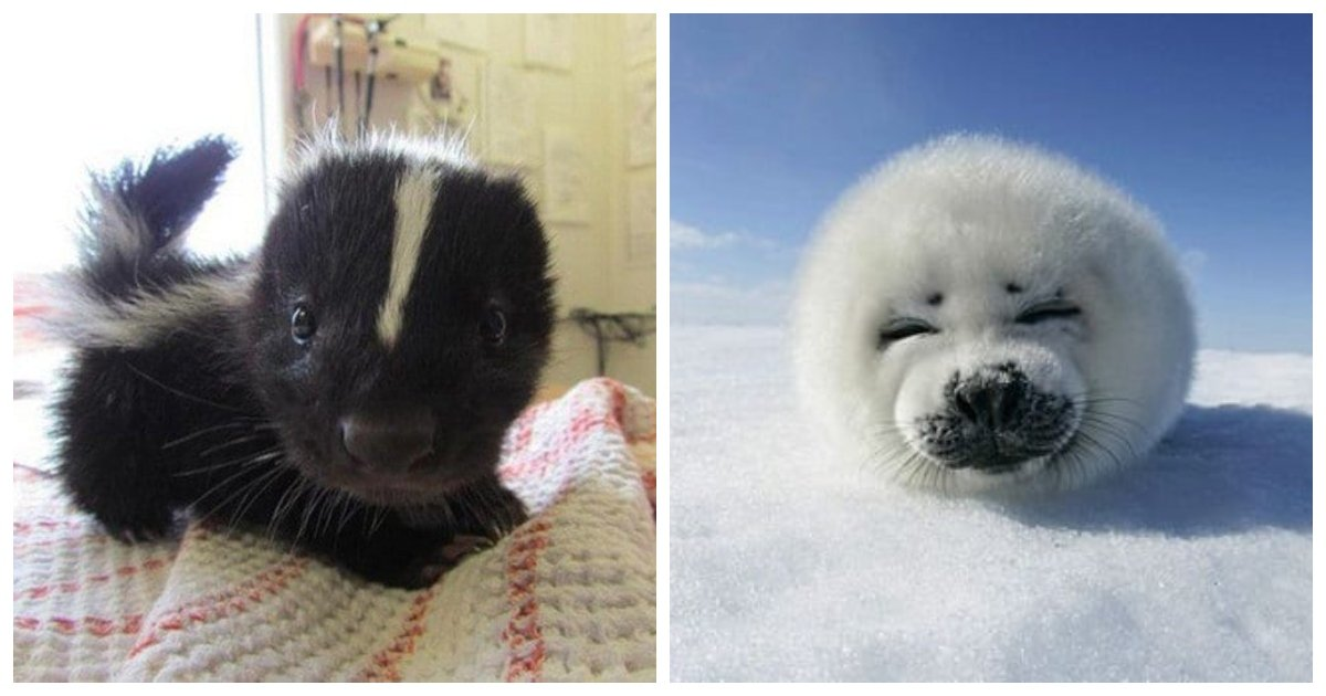 animals 1.jpg?resize=1200,630 - 19 Pictures Of Cute Baby Animals