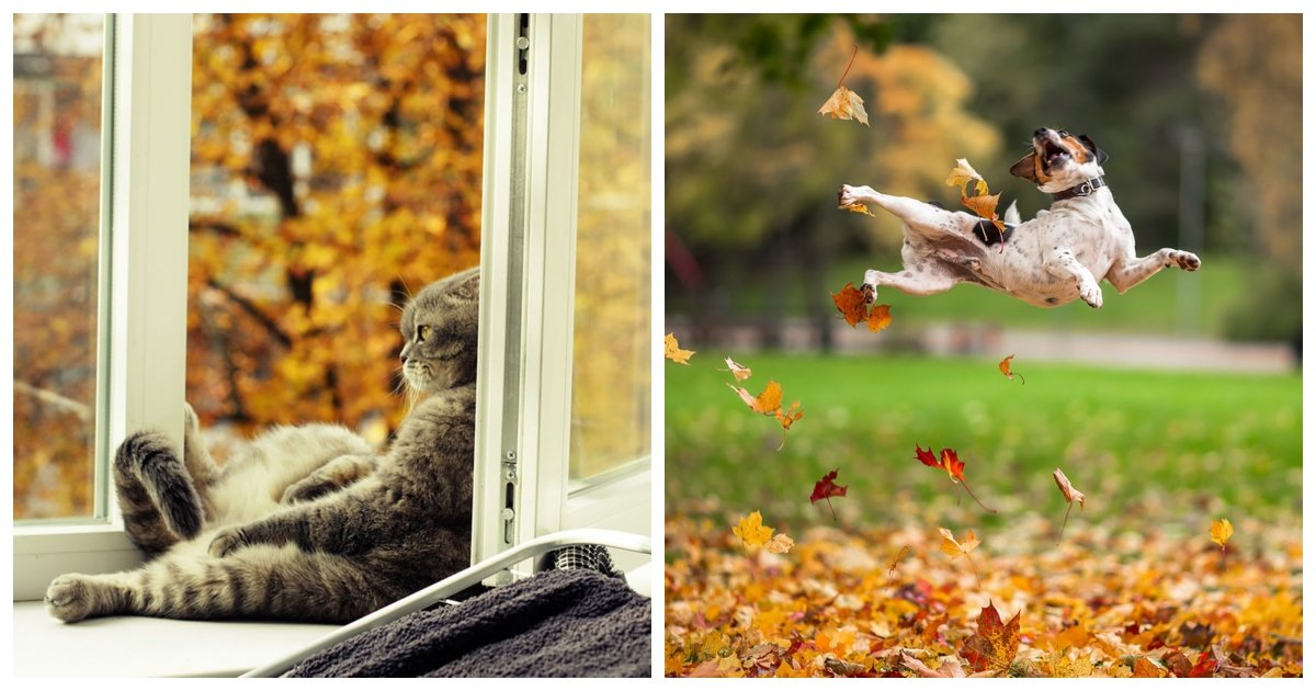 autumn.jpg?resize=1200,630 - 22 Adorable Animals Enjoying the Magic of Autumn