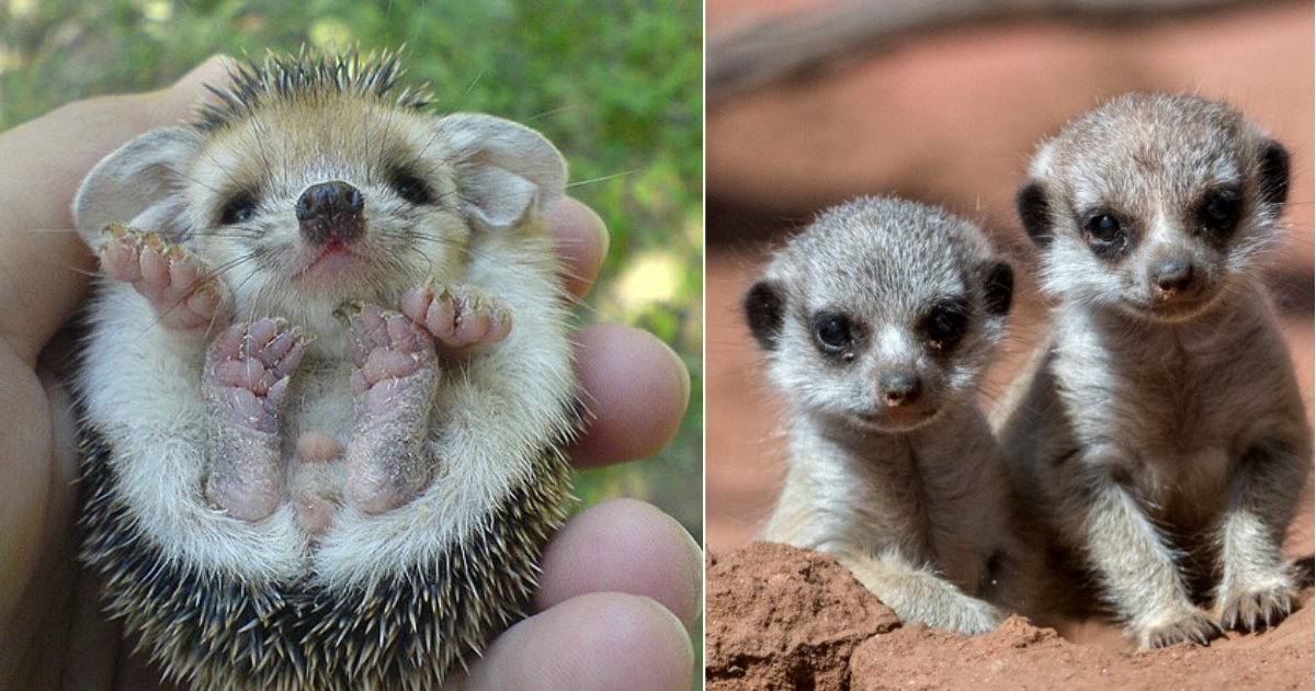 baby animals.jpg?resize=412,232 - 18 Photos Of The Most Adorable Baby Animals You Will Ever See