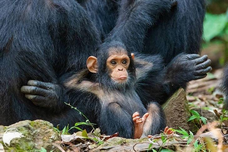 bebes animaux mignons 02.jpg?resize=412,232 - 22 bébés animaux trop adorables pour être vrais