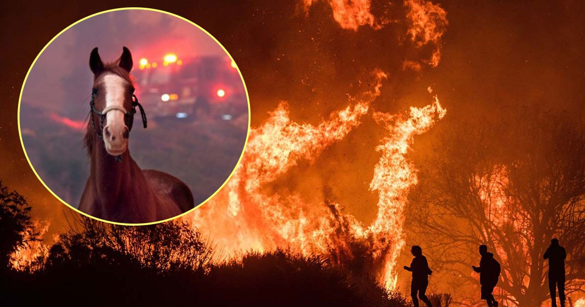 california wildfire.jpg?resize=300,169 - California Communities Come Forward To Save And Reunite Animals Caught In Wildfires With Their Owners