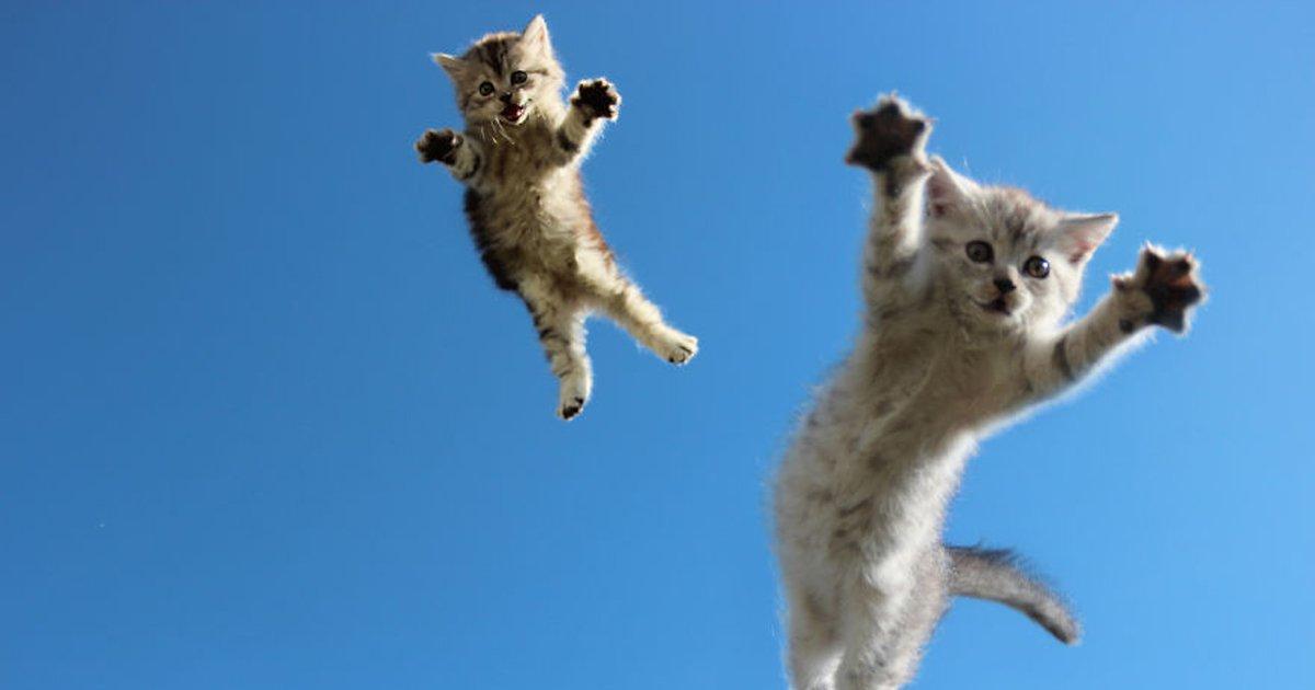 capa10 16.jpg?resize=1200,630 - 20 des animaux qui sautent comme des cons, la connerie du vendredi montée sur ressorts
