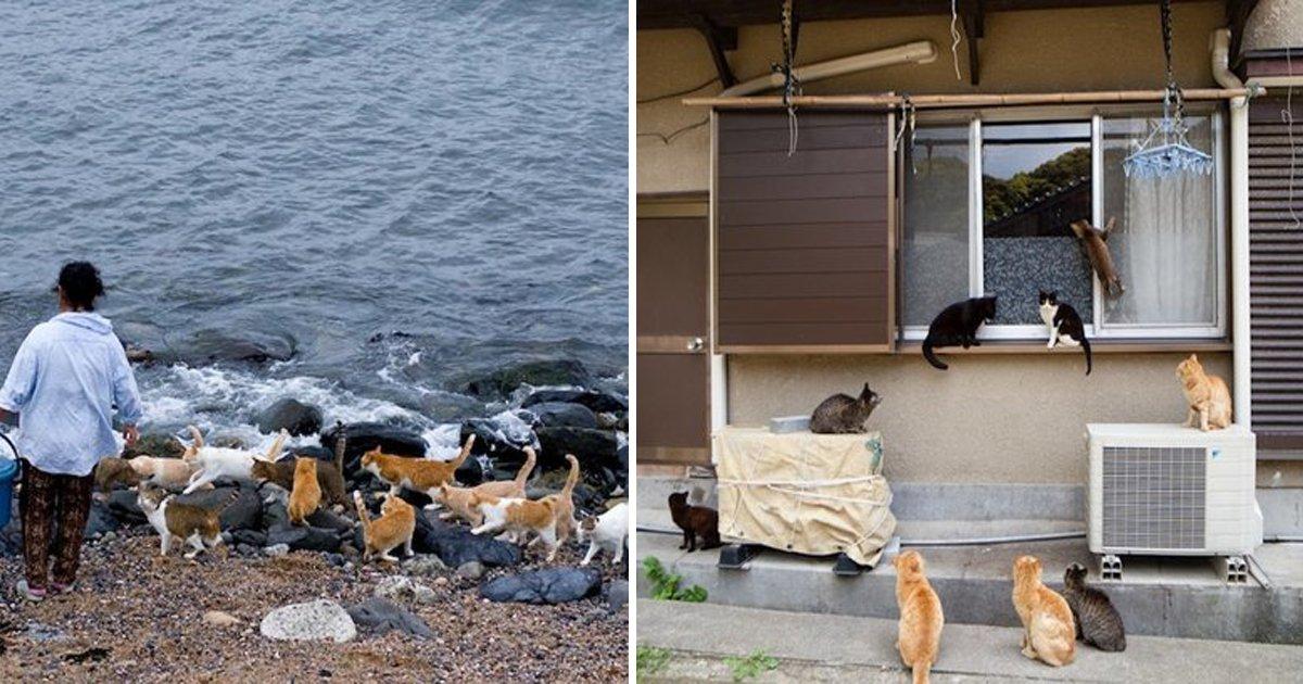 capa19 11.jpg?resize=1200,630 - 40 des photos du paradis des chats, une ile au Japon