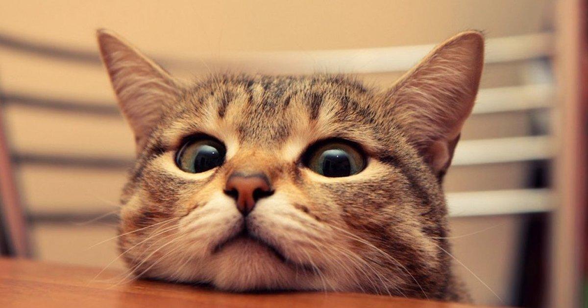 capa20 12.jpg?resize=412,232 - 24 de ma vie en gif : une journée dans la peau d'un chat