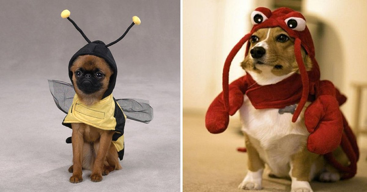capa4 15.jpg?resize=1200,630 - 25 des photos de chiens parfaitement déguisés