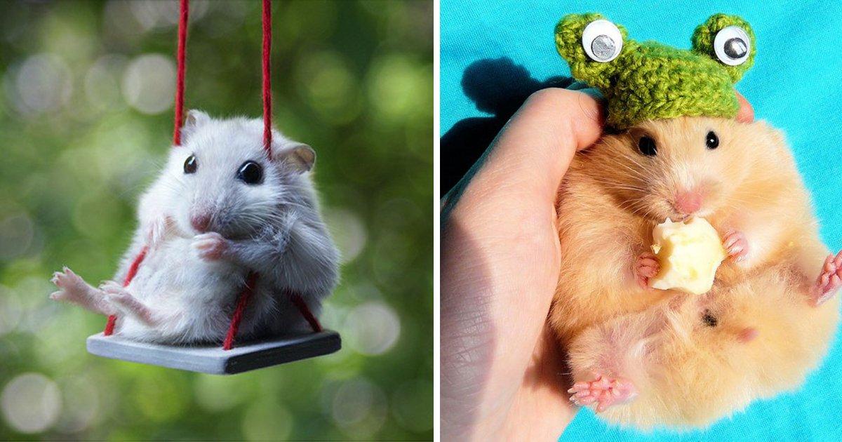 capa7 15.jpg?resize=1200,630 - 20 des hamsters les plus mignons de l'histoire de l'humanité