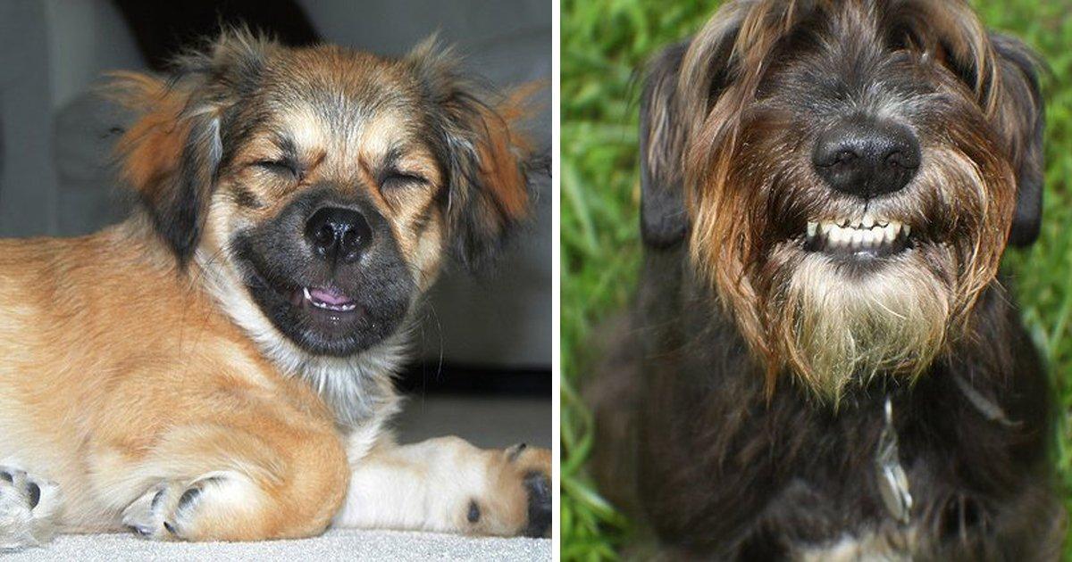 capa9 15.jpg?resize=1200,630 - 36 des photos de chiens qui sourient à la vie