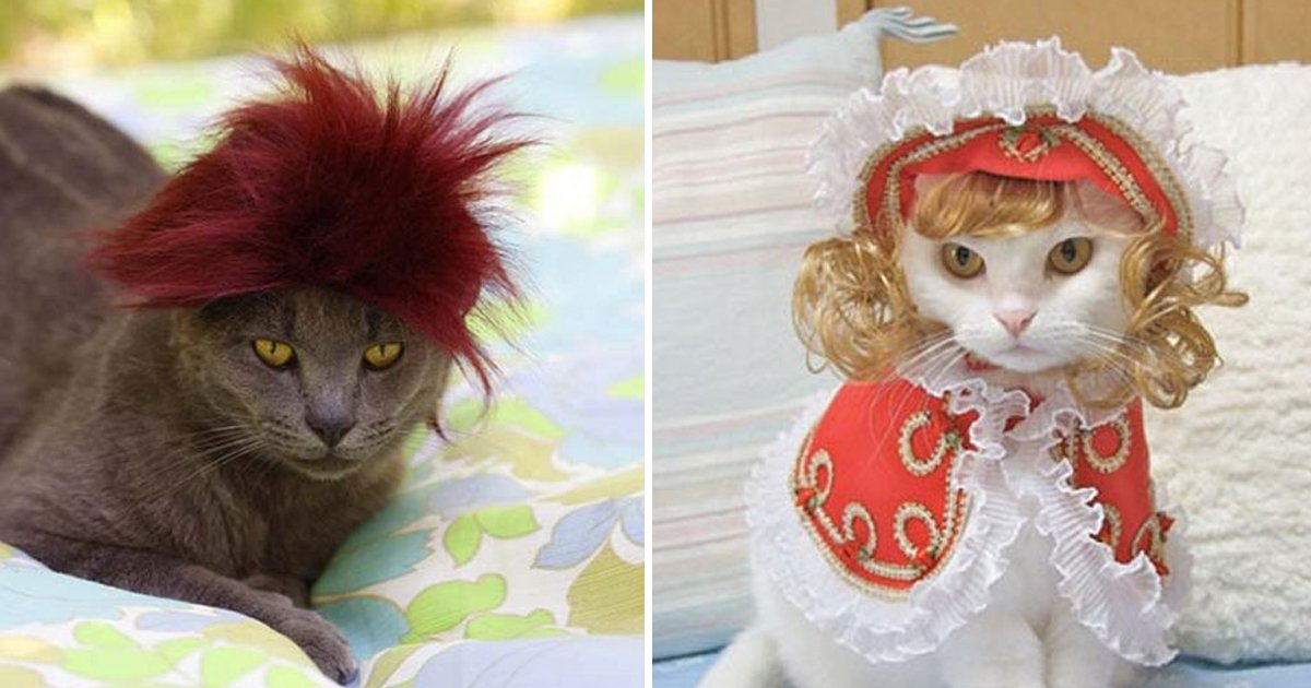 capa9 16.jpg?resize=1200,630 - 40 des photos de chats avec de jolies perruques