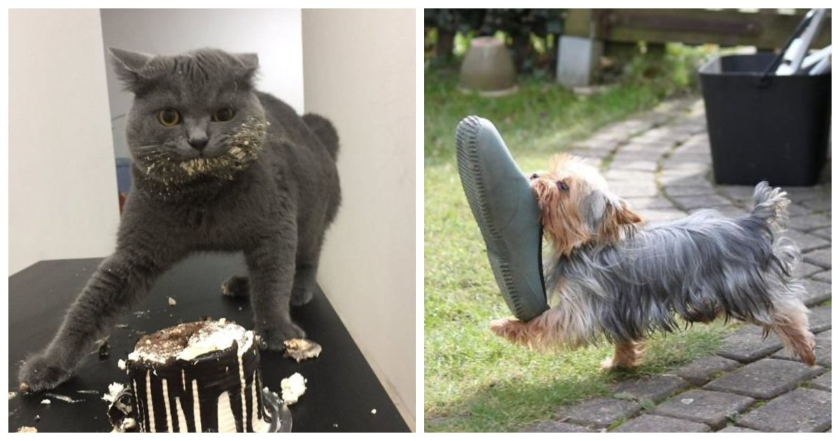 caught.jpg?resize=1200,630 - 23 Hilarious Photos of Pets Caught Red-Handed
