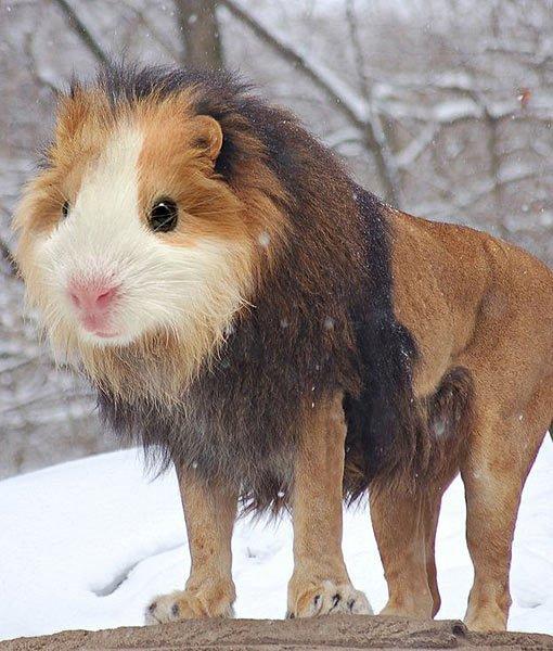 6-104239-hybrid-animals-13-510x600-1432757238.jpg