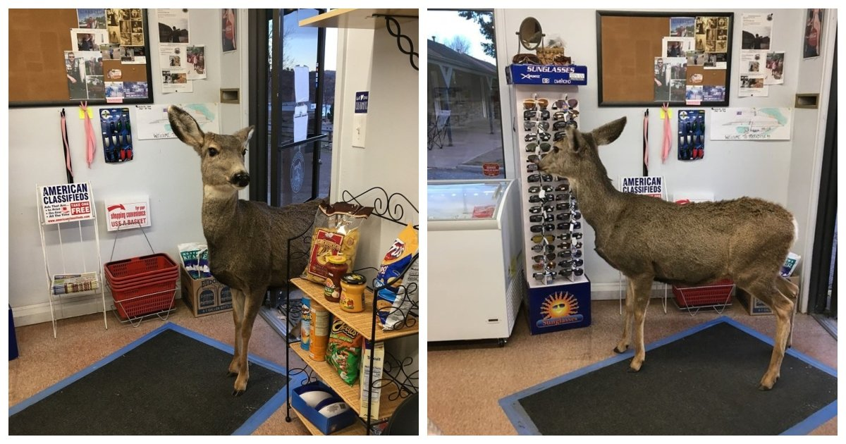 """deer.jpg?resize=412,232 - Deer """"Window Shops"""" In A Store Then Comes Back 30 Minutes Later With An Unexpected Surprise"""