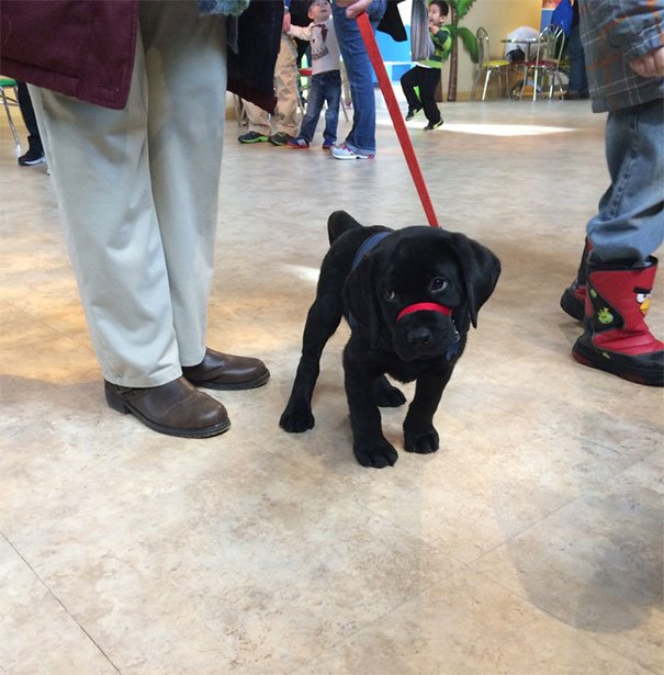 This Little Guy Is Training To Become A Service Dog And His Class Had A Field Trip At Turkey Hill Ice Cream Factory