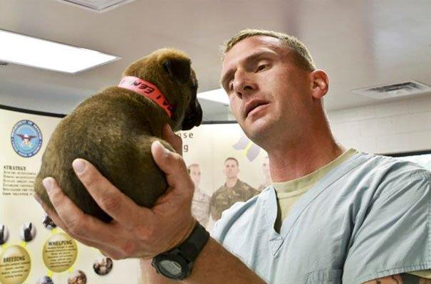 Service Puppy At Work