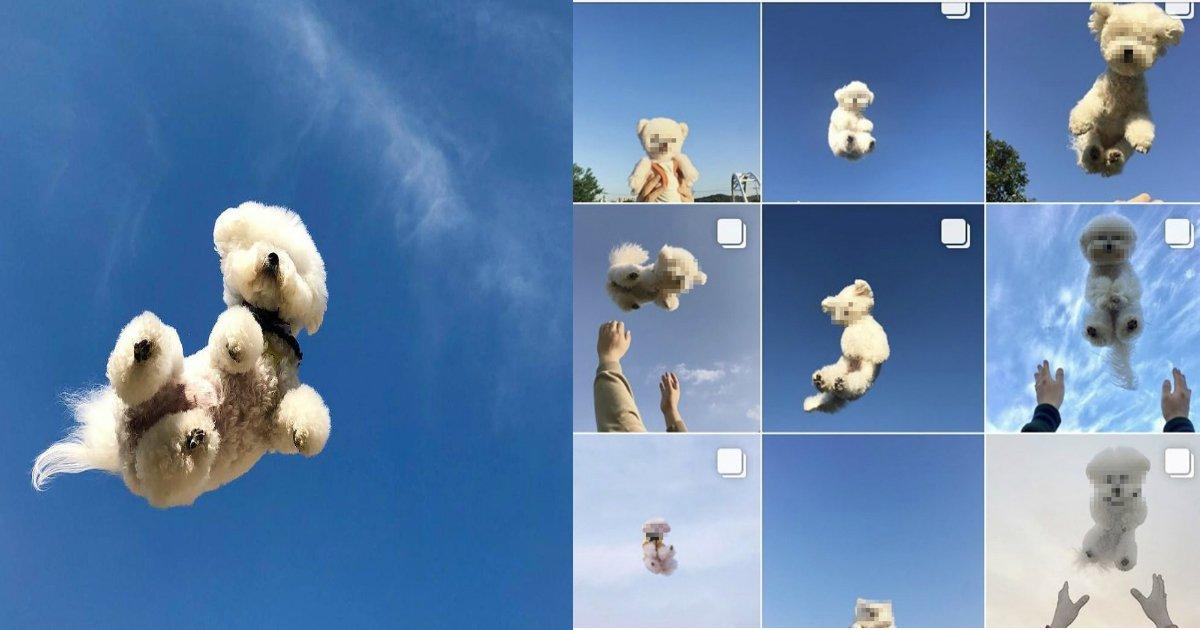 """e6849be78aac.jpg?resize=1200,630 - 愛犬を飛ばせる写真に""""イイネ""""!?危ない「#空ショット」が流行!?"""