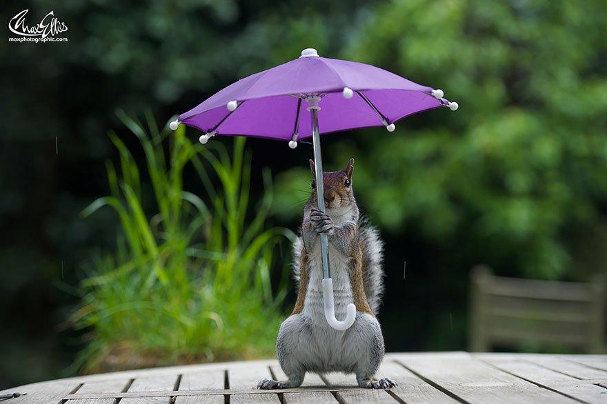 ecureuil parapluie 05.jpg?resize=412,232 - Cet écureuil et son parapluie semblent inséparables