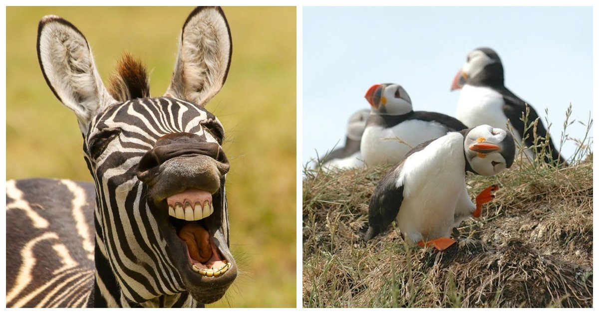 funny.jpg?resize=1200,630 - 21 Hilarious Entries to the 2016 Comedy Wildlife Photography Awards