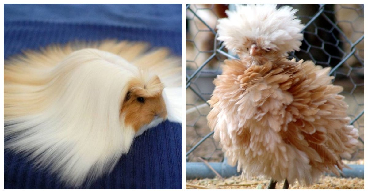 fur.jpg?resize=1200,630 - 27 Animals That Have Better Hair than You