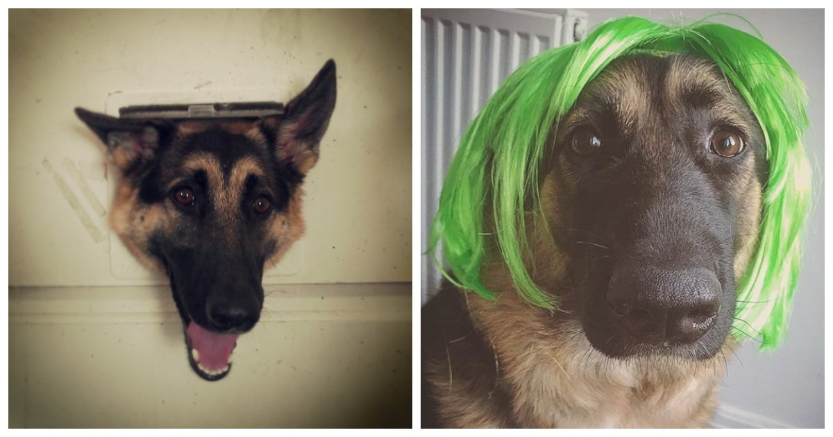 german.jpg?resize=412,232 - 20 Photos That Made Us Fall in Love With German Shepherds